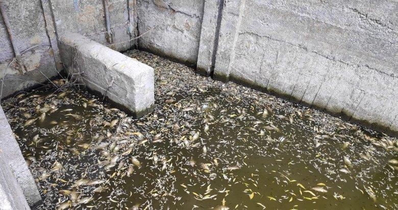 Akarsu 2 yılda kurudu, binlerce balık telef oldu!