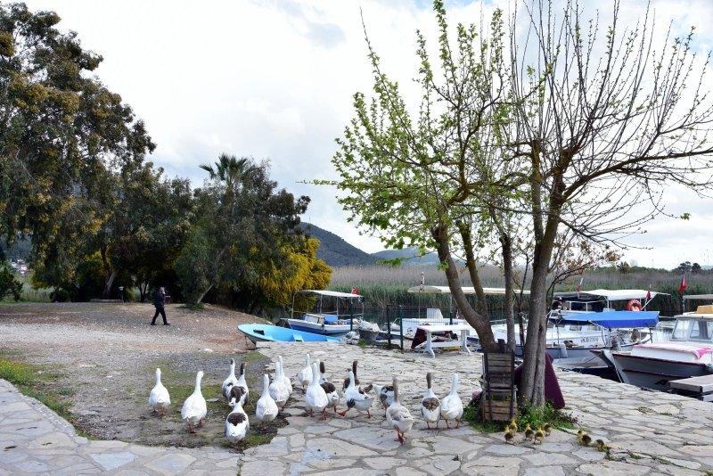 Sakin şehir ördeklere kaldı