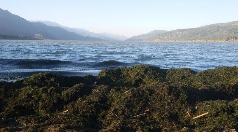 Doğa harikası Kovada Gölü'nün son hali içler acısı