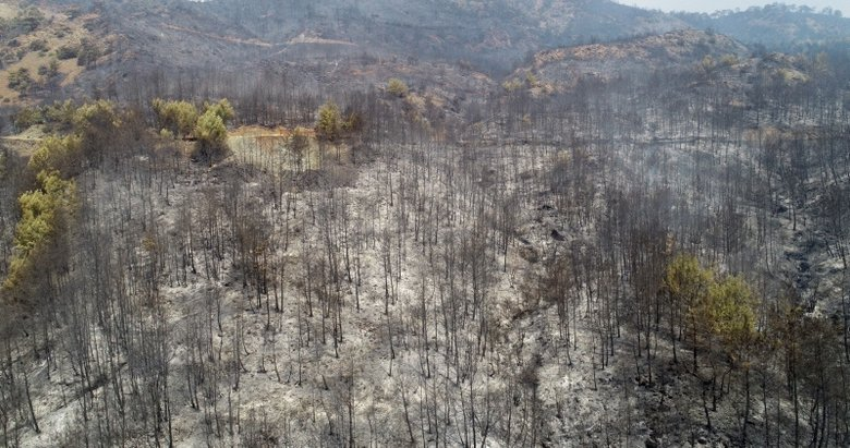 Bakan Pakdemirli'den Muğla'daki orman yangınları ile ilgili açıklama