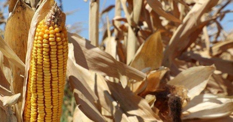 Bakan Pakdemirli'den mısır üreticisine müjdeli haber!