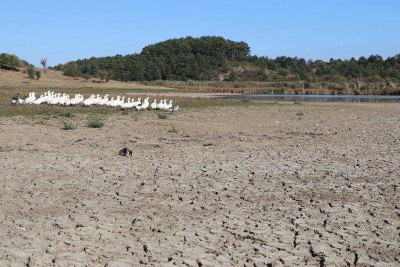 Kuş cenneti Yayla Gölü'nde 20 yılın en düşük su seviyesi