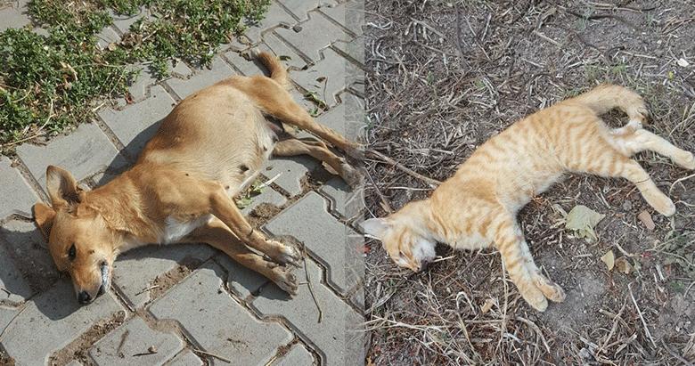 Bandırma'da kedi köpek katliamı