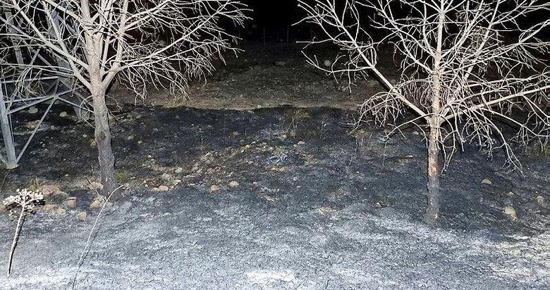 İzmir-Çeşme yolunda ot yangını! Anında kontrol altına alındı