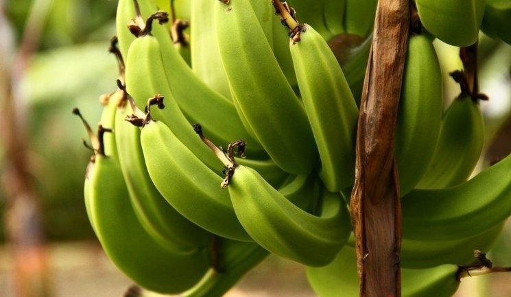 Zayıflattığı kanıtlanan mucize besinler!