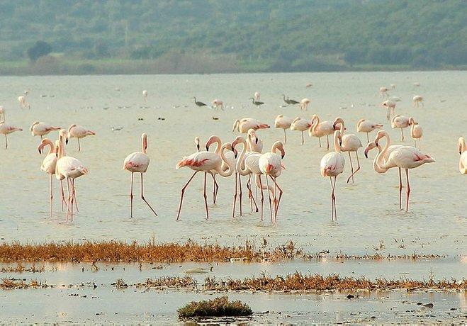 Flamingolar, Aliağa Kuş Cenneti'ni renklendirdi