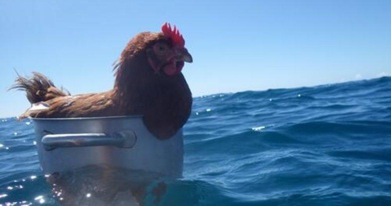 Denizin ortasında tencere içindeki tavuk! Gören hayretini gizleyemedi
