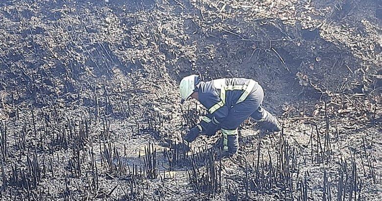 Manisa'da korkunç olay! Sazlık alandaki yangında 10 köpek öldü