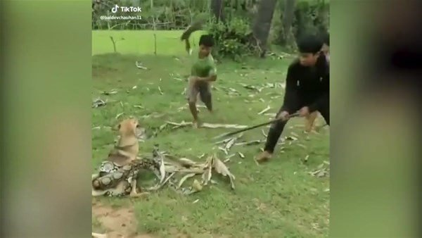 Dev yılan evcil köpeğe saldırdı! Dehşet dolu anlar...