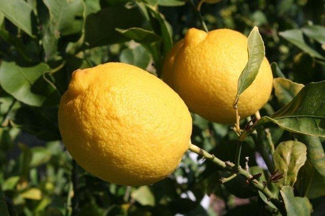 Tam bir şifa kaynağı! İşte limonlu suyun faydaları...
