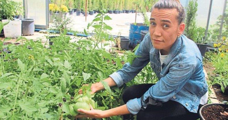Mühendis Sözeri ile babası ata tohumlarıyla domates üretiyor