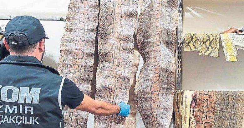 31 kaçak yılan derisine operasyonla el konuldu