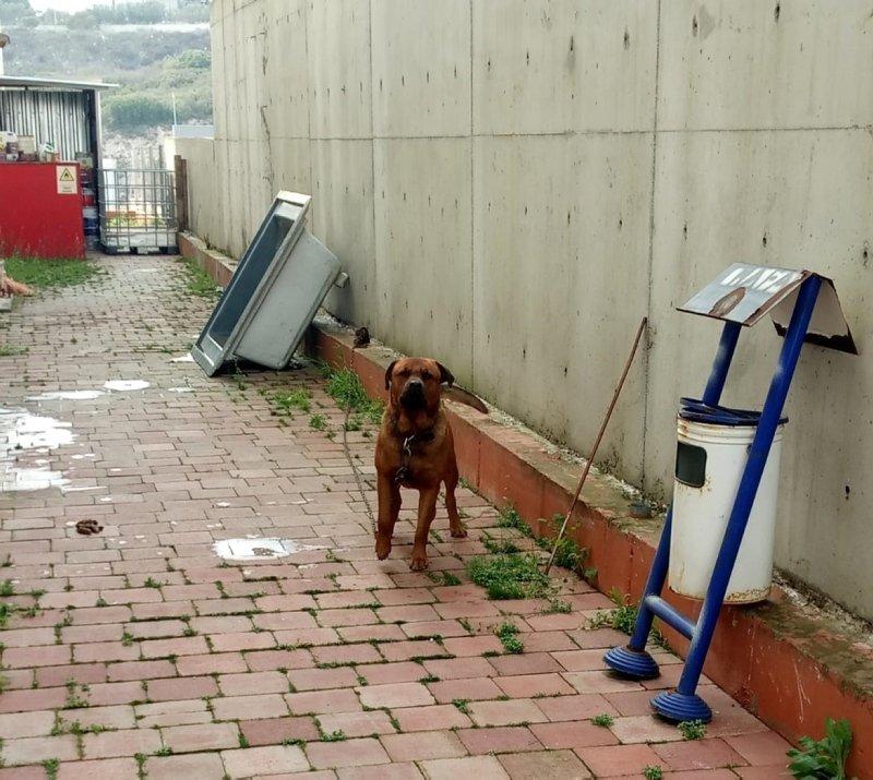 İzmir'de iş görüşmesine gittiği fabrikada köpek saldırdı
