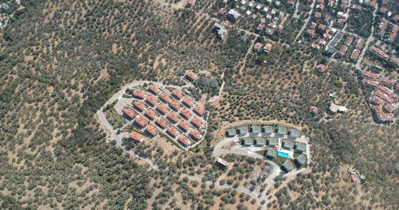 Kazdağları'nda imar skandalı! Villa yapımı için 2,5 milyon zeytin ağacı kesildi