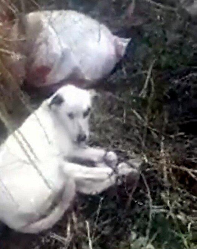 Manisa avcılar ölüme terk edilen 3 köpeği kurtardı ile ilgili görsel sonucu
