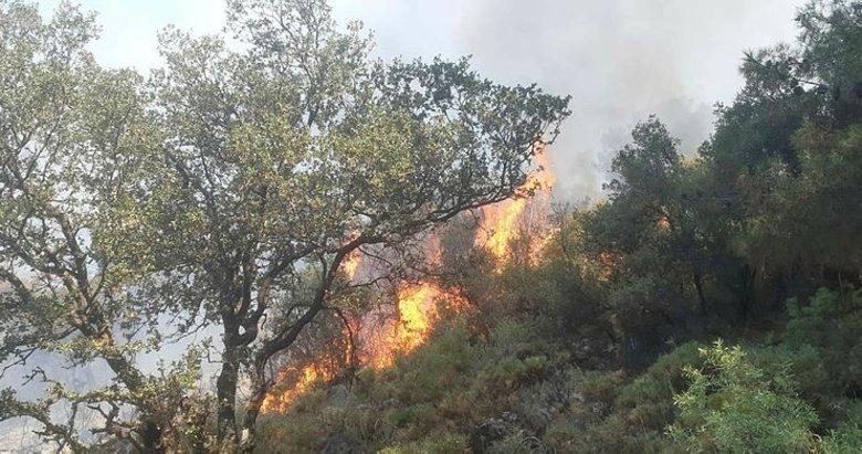 Fethiye'de alevler 5 dönüm kızılçam ormanını küle çevirdi