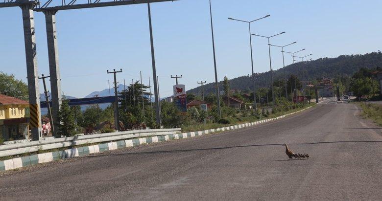 Denizli'de şaşırtan görüntü! Yolunu kaybeden angut ailesi sokaklarda yürüyüşe çıktı
