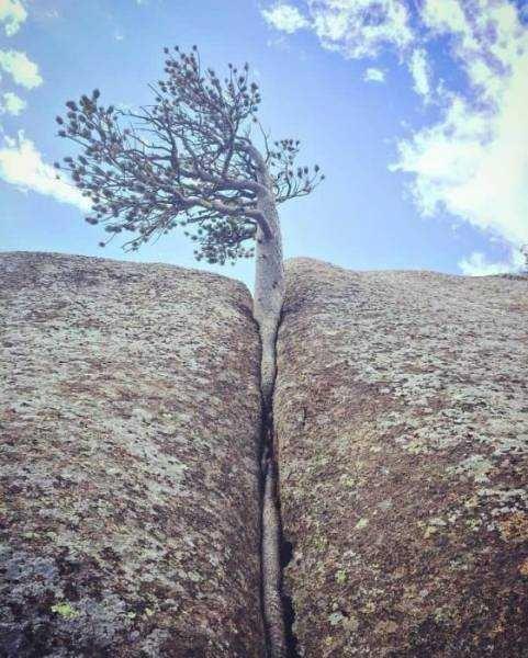 İşte zorluklara meydan okuyan ağaçlar
