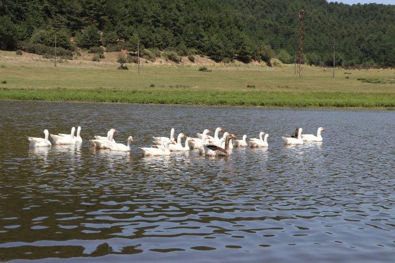 Buldan Yayla Gölü'nün Doğal Sit Alanı ilan edilmesi memnuniyetle karşılandı