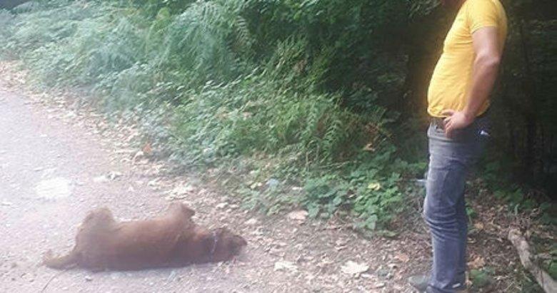 Çanakkale 'Çan'da hayvanlar zehirlendi' iddiası