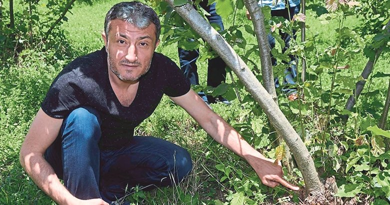 Fındık üreticisi Drakula'ya karşı
