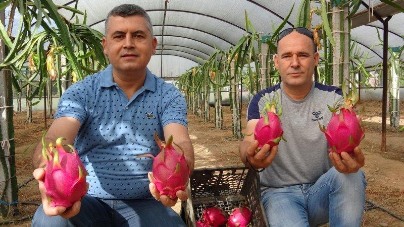 Aydın'daki bu meyve, henüz dalındayken 10 ila 25 liraya satılıyor