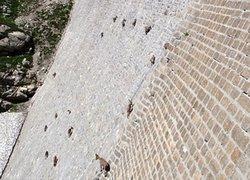 Keçiler nasıl böyle tırmanabiliyor?
