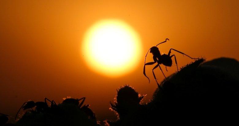 Karıncaların gözlerden uzakta yaşamı