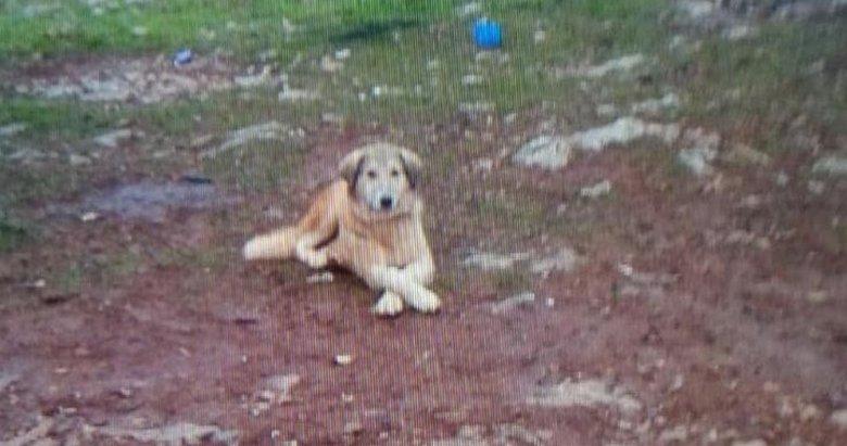 Muğla'da akılalmaz olay! Köpeğini 'fazla ekmek yiyor' diye öldürdü