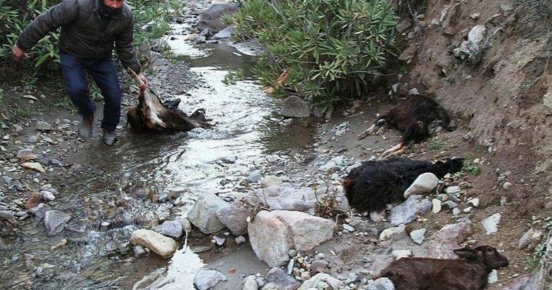 40 keçinin ölüsü bulunmuştu! Korkutan olayın sebebi belli oldu