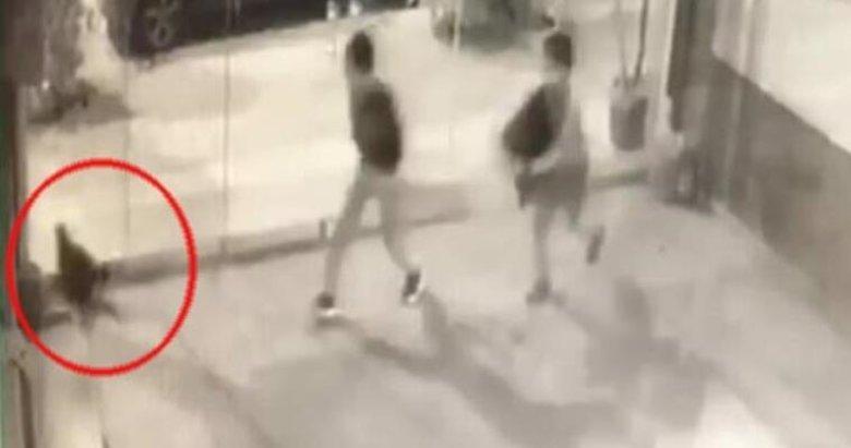 İzmir'de vahşet görüntüleri! İki çocuk kediyi bayıltana kadar dövdü