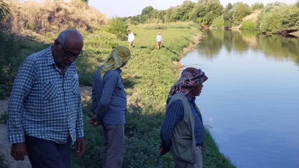 Gediz Nehri'ndeki toplu balık ölümleri korkuttu