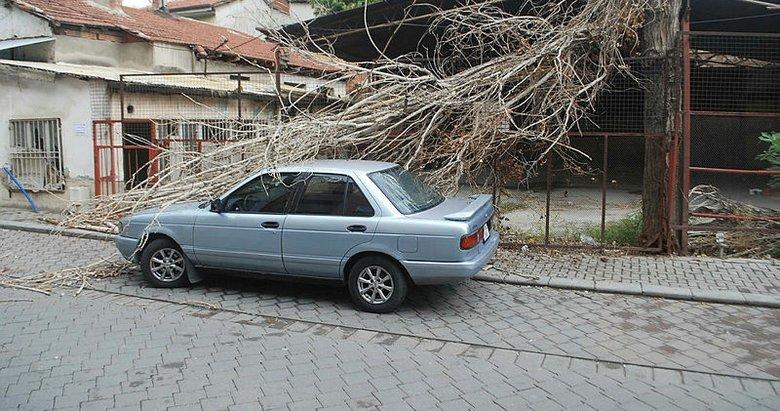 Pamukkale'de otomobilin üzerine kavak ağacı devrildi