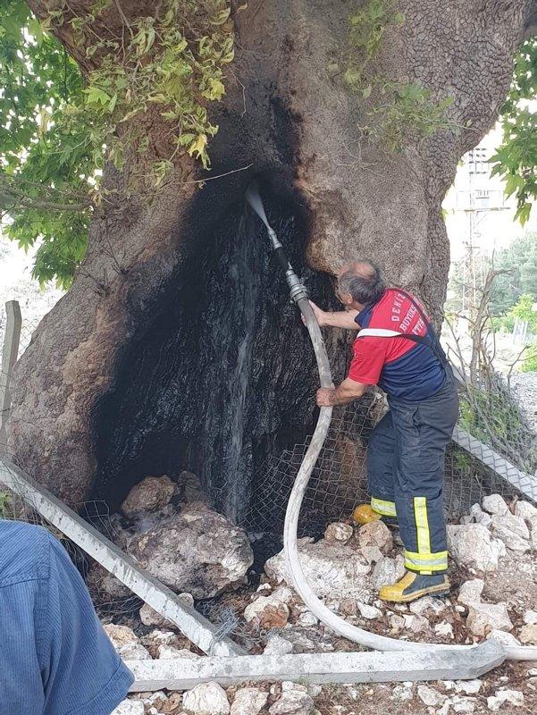 Denizli'de meradaki 4 asırlık çınar ağacını yakmak istediler