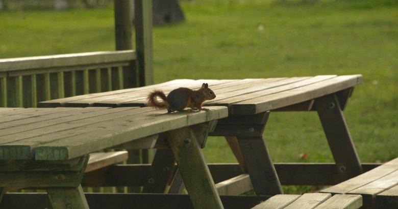Kütahya'da parkta yaşayan sincaplar sakinliğin keyfini çıkardı