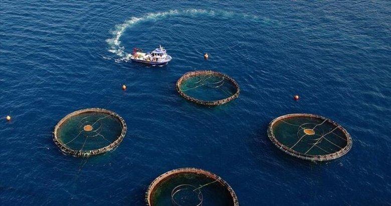 Kovid-19 nedeniyle düşen su ürünleri ihracatı yeniden yükselişe geçti